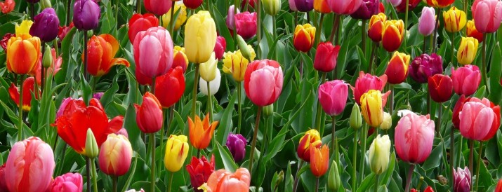 experimento flores