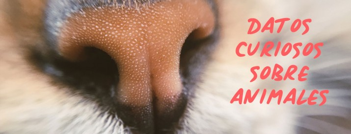 curiosidades-animales-