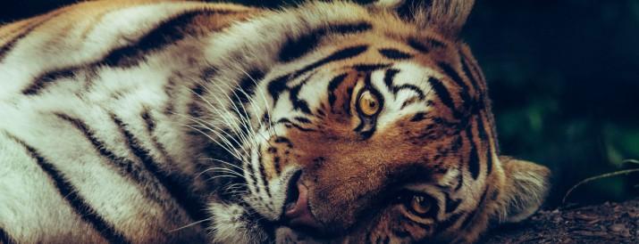 animales extinción