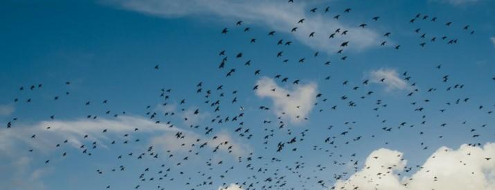 blog aves migratorias