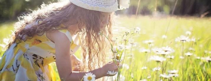 flores que florecen - blog