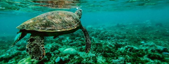 6 razones cuidar oceanos