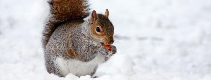 animales hibernación ciencia divertida