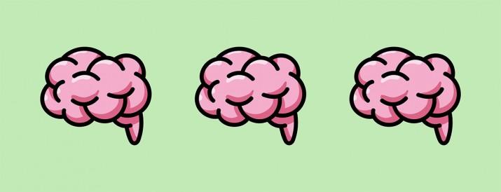 curiosidades cerebro blog ciencia divertida galicia